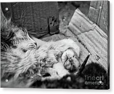 A Mother's Paw Acrylic Print