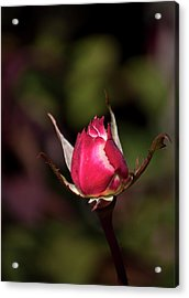 Acrylic Print featuring the photograph A New Beginning by John Knapko