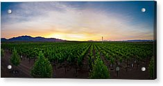A New Day In The Field Acrylic Print by Swift Family