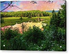 A New England Bog. Acrylic Print