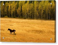 A Nice Autumn Day Acrylic Print by James BO  Insogna