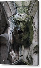 Acrylic Print featuring the photograph A Notre Dame Griffon by Christopher Kirby