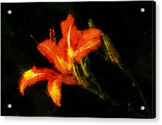 A Painted Lily Acrylic Print