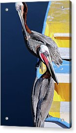 A Pair Of Brown Pelicans On A Blue And Yellow Rowboat Acrylic Print
