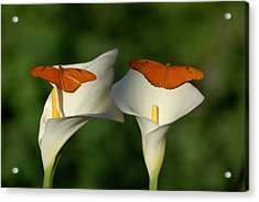 A Pair Of Butterflies Land Upon A Pair Of Lilies Acrylic Print by Susan Heller
