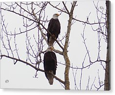 A Pair Of Eagles Acrylic Print by Karen Molenaar Terrell