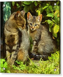 A Pair Of Feral Cats Acrylic Print