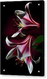 A Pair Of Lilies Acrylic Print