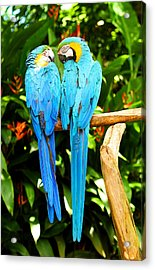A Pair Of Parrots Acrylic Print by Marilyn Hunt