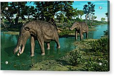 A Pair Of Platybelodon Grazing Acrylic Print by Walter Myers
