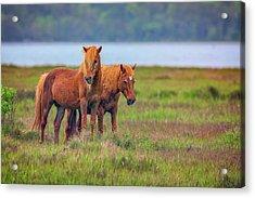 A Pair Of Ponies Acrylic Print by Rick Berk