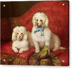 A Pair Of Poodles Acrylic Print