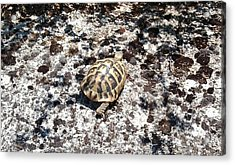 A Pal We Found In Greece Acrylic Print
