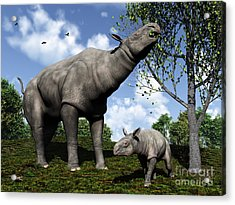 A Paraceratherium Mother Grazes Acrylic Print by Walter Myers