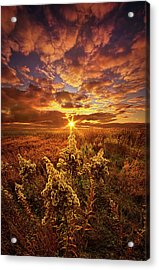A Part Of Everything Acrylic Print by Phil Koch