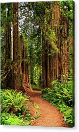 Acrylic Print featuring the photograph A Path Through The Redwoods by James Eddy