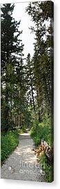 A Path Through The Trees Acrylic Print