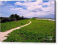 A Path Thru The Dunes Acrylic Print