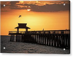 A Pelican Dive-bomb At The Naples Pier Naples Fl Acrylic Print