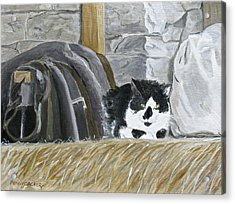 A Penns Valley Barn Kitty Acrylic Print
