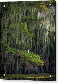 A Perch With A View Acrylic Print