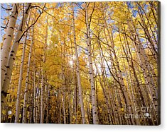 Acrylic Print featuring the photograph A Perfect Day Begins by The Forests Edge Photography - Diane Sandoval
