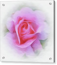 A Perfect Pink Rose Acrylic Print