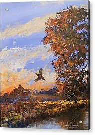 A Pheasent At Sundown Acrylic Print by Douglas Trowbridge