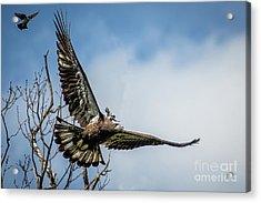 A Piggyback Ride Acrylic Print