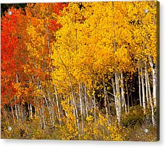 A Place In The Aspen Forest Acrylic Print by Tim Reaves