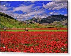 A Poppyy Dream Acrylic Print