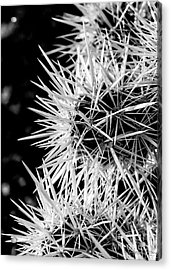 A Prickly Subject Acrylic Print