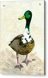 A Proud Duck Acrylic Print