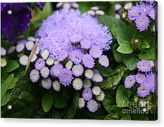 Acrylic Print featuring the photograph A Purple Morning by Edward R Wisell