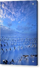 Acrylic Print featuring the photograph A Quiet Light Purely Seen by Phil Koch