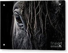 A Race Horse Named Tikki Acrylic Print