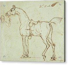 A Racehorse, Bridled And Saddled  Acrylic Print