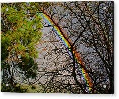 A Rainbow Tree Acrylic Print by Ben Upham III