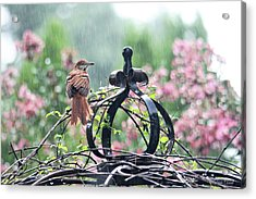 A Rainy Summer Day Acrylic Print