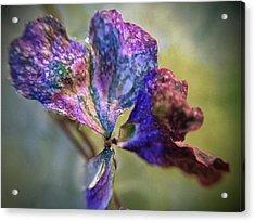 A Real 4 Leaf Clover Acrylic Print