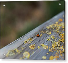 Acrylic Print featuring the photograph A Red Dot That Moves by Lora Lee Chapman