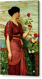 A Red Rose   Acrylic Print by John William Godward