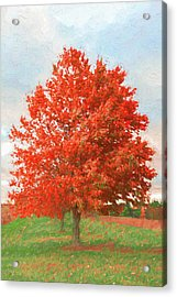 A Red Tree Acrylic Print by Jeff Oates Photography