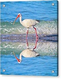 A Reflective Walk Acrylic Print