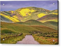 Acrylic Print featuring the photograph A Road Less Traveled by Marc Crumpler