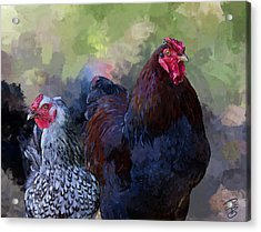 A Rooster And A Hen Acrylic Print by Debra Baldwin