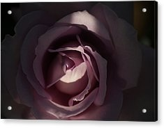 A Rose By Any Name Acrylic Print