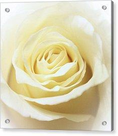 A Rose... Acrylic Print by Elizabeth Budd