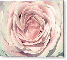 Acrylic Print featuring the digital art A Rose Is A Rose by Margaret Hormann Bfa