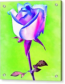A Rose Of A Different Color Acrylic Print